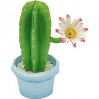 Колоннообразный кактус